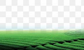Tea Garden - Green Tea Tea Garden Download PNG