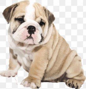 Vector Cute Pug Puppy Bulldog - American Bulldog Old English Bulldog IPhone 6S Puppy PNG