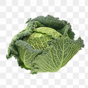 Cabbage - Broccoli Savoy Cabbage Spring Greens Vegetable PNG
