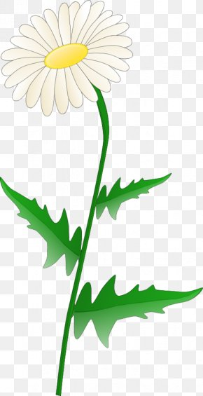 Daisy Flower Clipart - Free Content Common Daisy Clip Art PNG