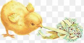 Easter Postcard Rabbit Illustration Image PNG