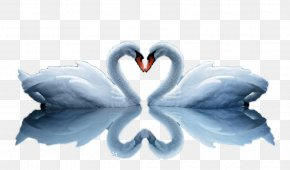 Two Swans Love - High-definition Video Embroidery High-definition Television Wallpaper PNG