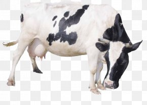 Bow Cows - Dairy Cattle Milk Livestock PNG