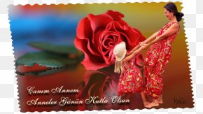 Mother's Day - Mother's Day Garden Roses Father's Day Greeting & Note Cards E-card PNG