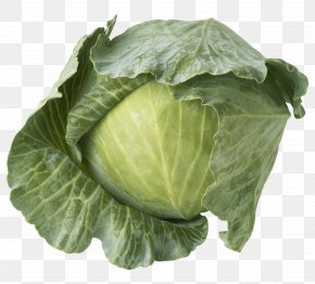 Cabbage - Savoy Cabbage Red Cabbage Cauliflower Brussels Sprout PNG