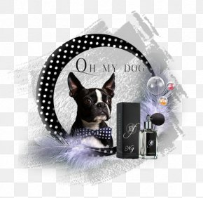 Pets Material Plane - Boston Terrier Dog Breed Leash Non-sporting Group Dog Collar PNG