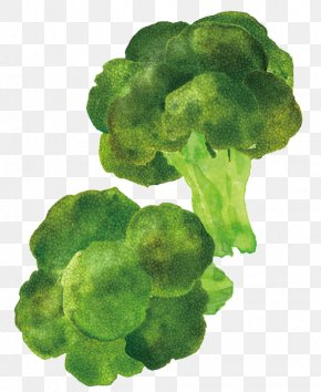 Cartoon Broccoli - Broccoli Cartoon Illustrator Food Illustration PNG