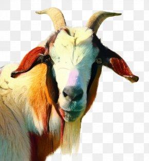 Russian White Goat Image Girgentana Vertebrate PNG