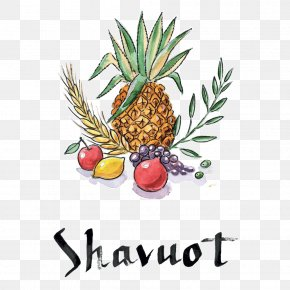 Pineapple - Shavuot Sukkot Jewish Holiday PNG