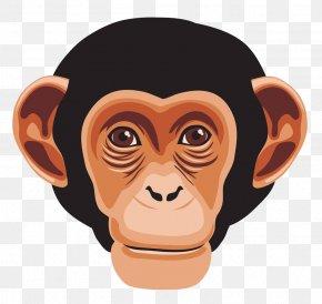 Gorilla - Chimpanzee Ape Primate Monkey PNG