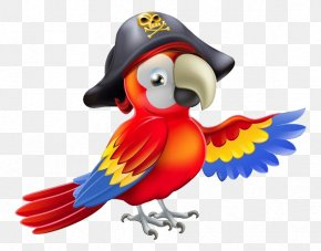 Cartoon Parrot Material - Pirate Parrot Piracy Royalty-free PNG