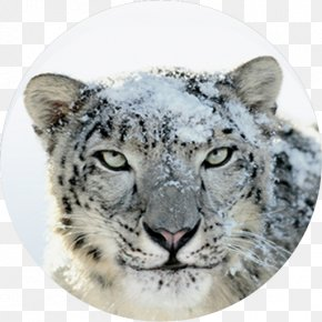 Apple - Mac OS X Snow Leopard MacOS Mac OS X Leopard Mac OS X Lion PNG