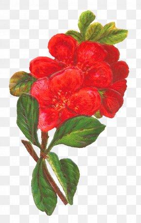 Botanical - Flower Red Floral Design Clip Art PNG