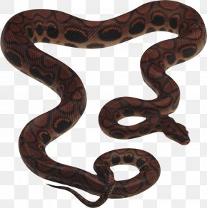 Snake Image Picture Download Free - Snake Reptile King Cobra Clip Art PNG