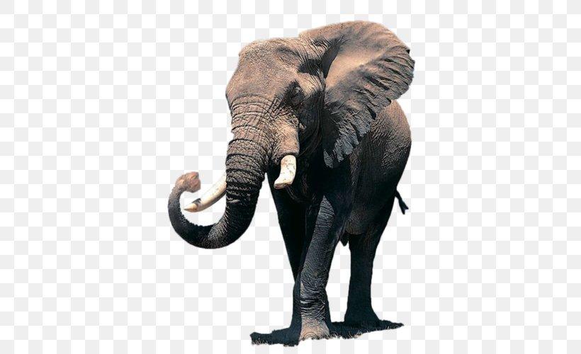 African Elephant Desktop Wallpaper Elephantidae Indian