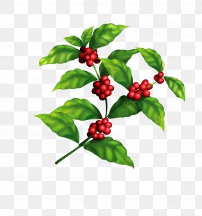 Coffee Tree Coffee Beans Picture Material - Arabica Coffee Coffee Bean Tree PNG