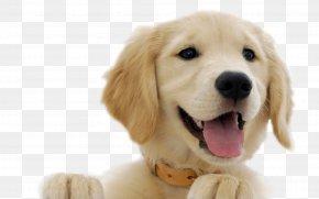 Dogs - Labrador Retriever Olde English Bulldogge Puppy Kindergarten PNG