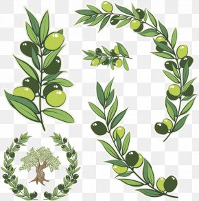 Vector Green Olive Branch - Olive Branch Olive Wreath Stock Photography Illustration PNG
