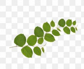 Leaf - Branch Leaf Tree Flower Plant Stem PNG