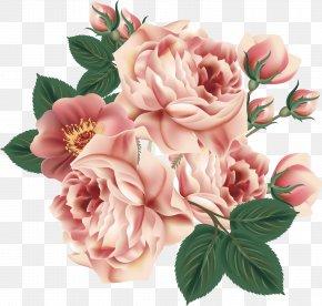 Flower Pattern Elements - Centifolia Roses Flower Floral Design Garden Roses PNG