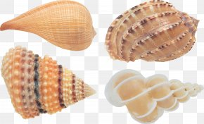 Seashell - Book Human Resources Management ????????????? Business PNG