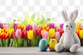 Cute Easter Egg HQ Pictures - Easter Bunny Easter Egg Tulip Wallpaper PNG