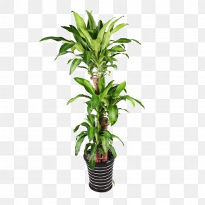 Green Plant Potted Plants - Plant Flowerpot Bonsai PNG