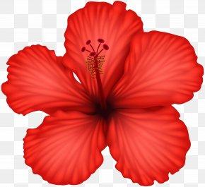 Red Hibiscus Clip Art - Hibiscus Clip Art PNG