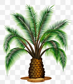 Palm Tree Images, Palm Tree PNG, Free download, Clipart