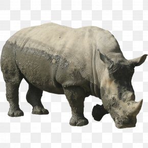 Rhino - Rhinoceros 3D Computer File PNG