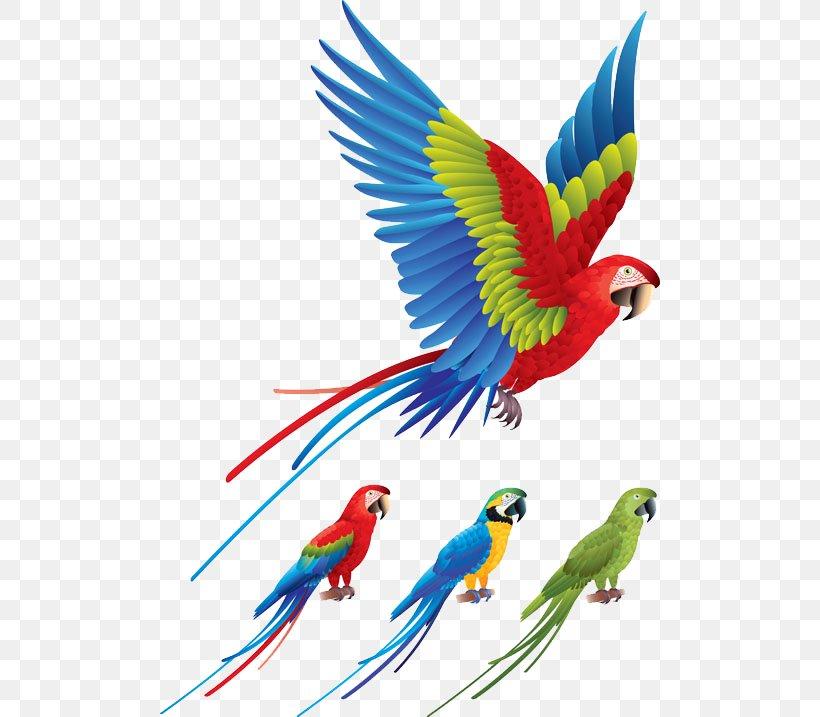 Parrot Bird Red-and-green Macaw Clip Art, PNG, 500x717px, Parrot, Beak, Bird, Common Pet Parakeet, Companion Parrot Download Free