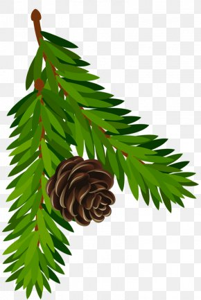 Transparent Pine Branch With Cone Art - Conifer Cone Pine Branch Fir PNG