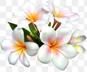 White Large Flower Clipart - Flower White Clip Art PNG