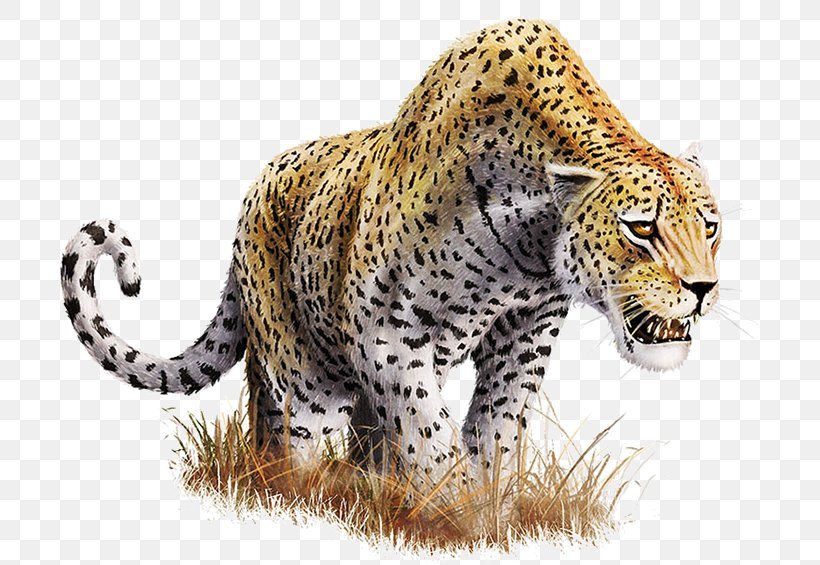 Leopard Clip Art, PNG, 730x565px, Leopard, Big Cats, Carnivoran, Cat Like Mammal, Cheetah Download Free