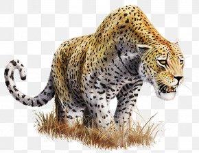 Leopard Transparent Background - Leopard Clip Art PNG