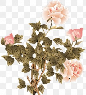 Peony - Moutan Peony Floral Design Flower PNG