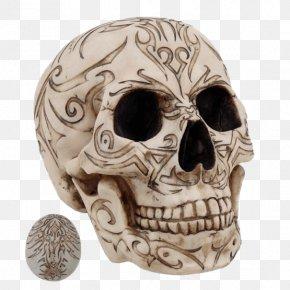 Skull - Skull Human Skeleton Homo Sapiens Statue Figurine PNG