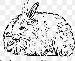 Rabbit - Angora Rabbit Easter Bunny Hare Domestic Rabbit Clip Art PNG