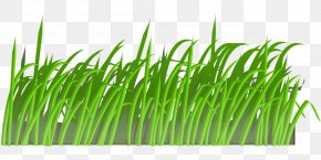 Easter Clip Art Openclipart Free Content ImageGrass Profile - Lent PNG