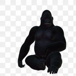 Gorilla - Western Gorilla Primate PhotoScape GIMP PNG