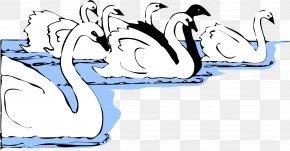 Swimming - Black Swan Desktop Wallpaper Clip Art PNG