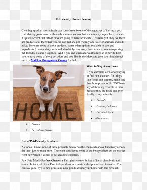 Paw Print - Jack Russell Terrier Text Photography Snout Magnettafel PNG