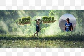 Aqua Design Amano - Southeast Asia Nature Story Stock Photography PNG