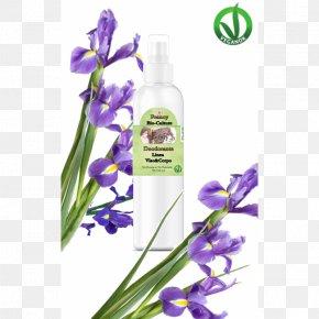 Violet - Lavender Violet Cut Flowers Herb PNG