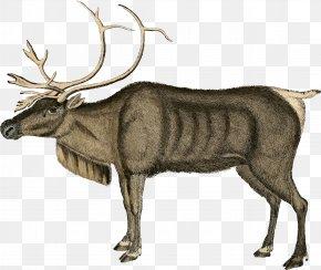 Reindeer - Reindeer Moose Santa Claus Clip Art PNG