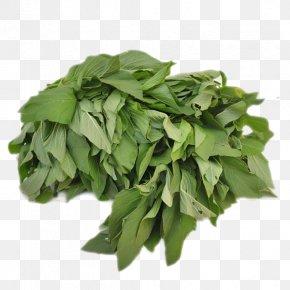 Vegetable - Basil Spinach Organic Food Vegetable PNG