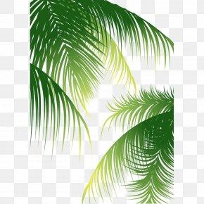 Coconut Tree Material - Euclidean Vector Arecaceae Coconut PNG