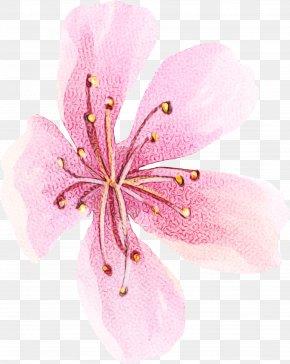 Geraniales Wildflower - Pink Flower Cartoon PNG