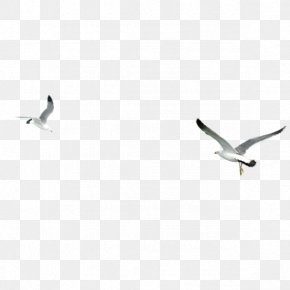 Wings Seagull - Bird Wing Google Images Download PNG