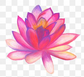 Flower Drawing - Drawing Flower Line Art Sketch PNG